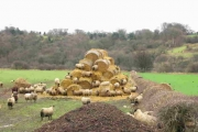 Sheep on a haystack