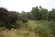 Cowpark Wood