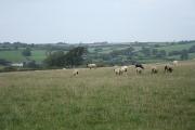 Creacombe: on Creacombe Moor