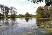 Drinkstone Park lake