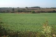 Mixed farmland west of High Moorsley