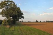 Farmland at Clopton Green