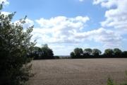 Farmland near Woodcutts