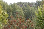 Ruttle Wood