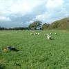 Farmland near Chwilog