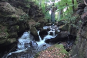 Healey dell