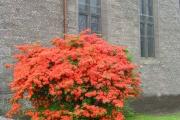 Our 'burning bush'